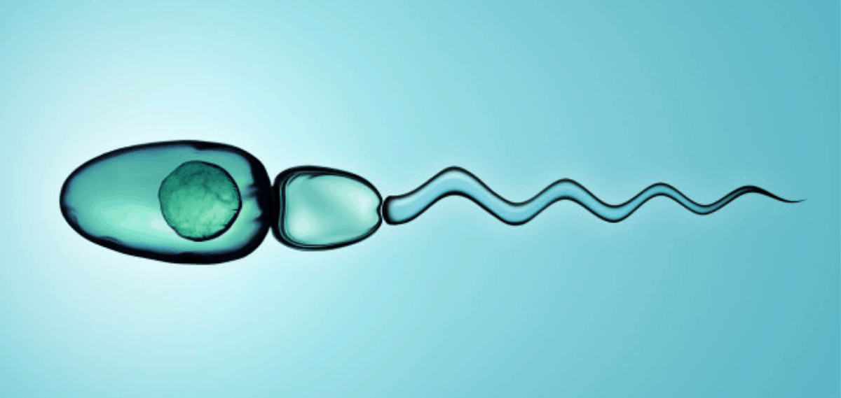 Surgical Sperm Retrieval services